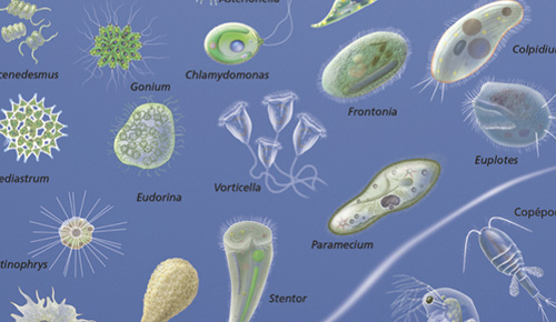 Life on Earth: Living things and cells